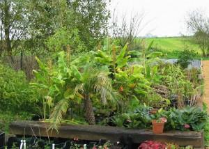jardiniere