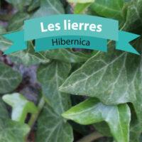 Hibernica